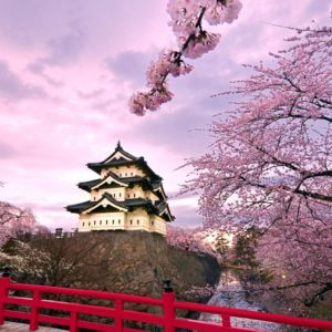 beautiful_japanese_cherry_blossom_season_wallpaper_13_1366x768